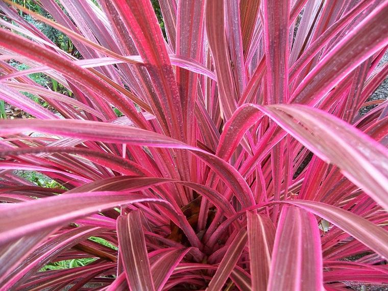 Piante Da Appartamento Foglie Rosse.Arbusti Eccone Alcuni A Foglie Rosse Per Giardini E Siepi