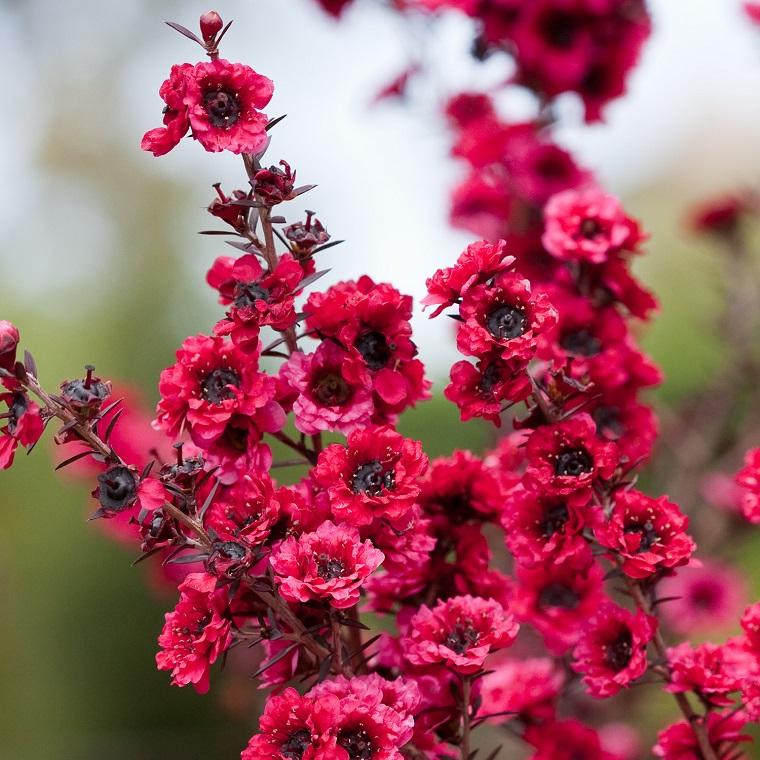 arbusti da giardino con fiori