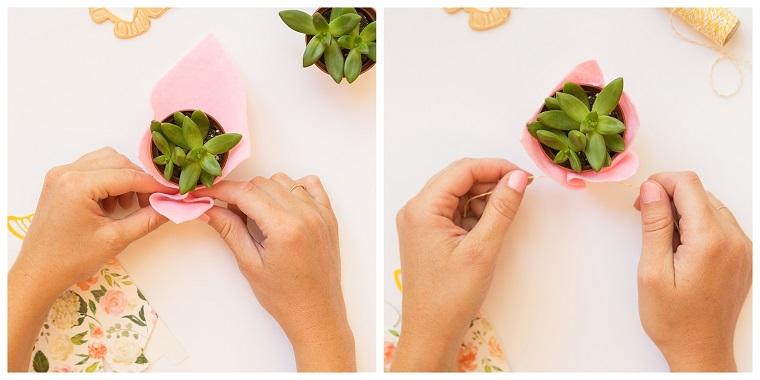 bomboniere utili matrimonio incartare con foglio rosa una piantina grassa