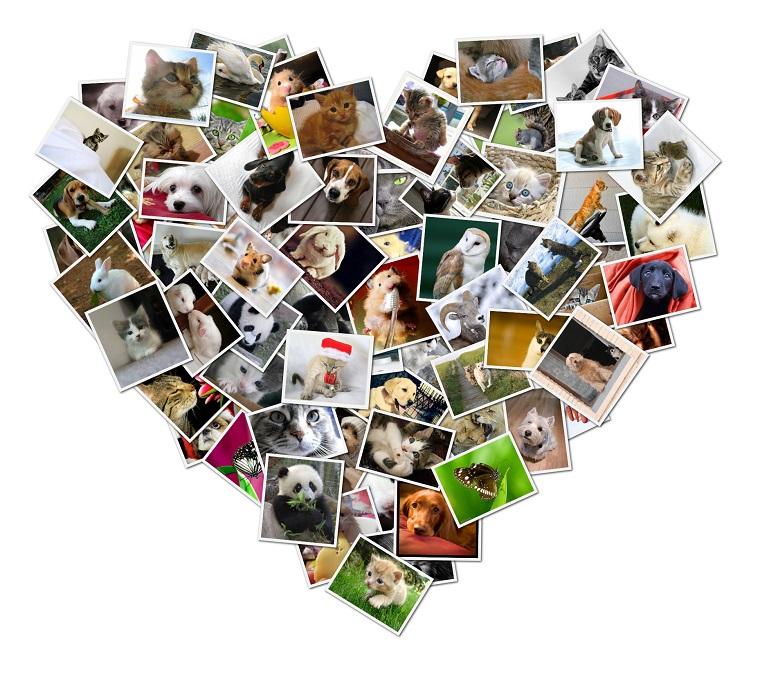 collage foto tante immagini forma cuore