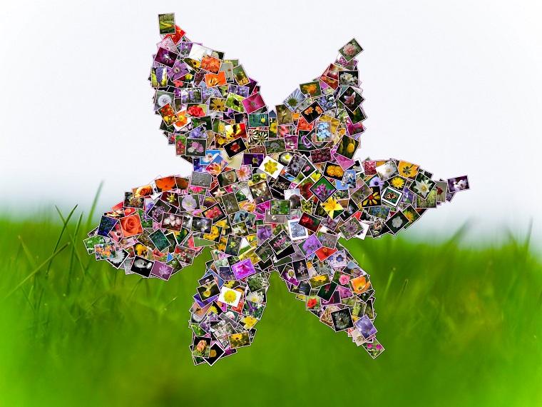 collage foto tante immagini forma fiore