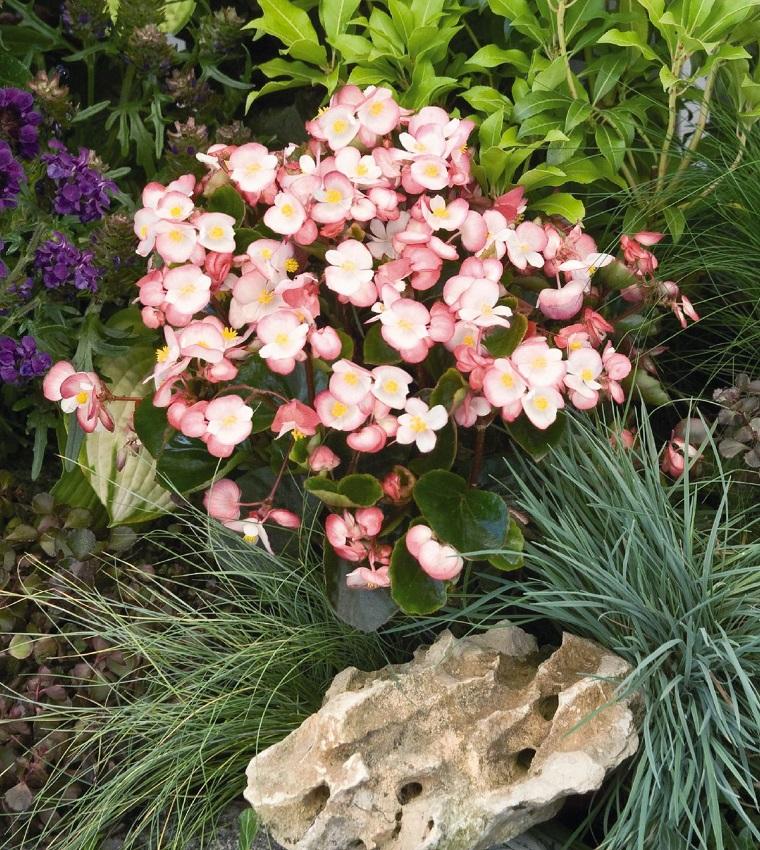 Fiori da giardino guida con le variet che vivono anche for Fiori sempreverdi da giardino