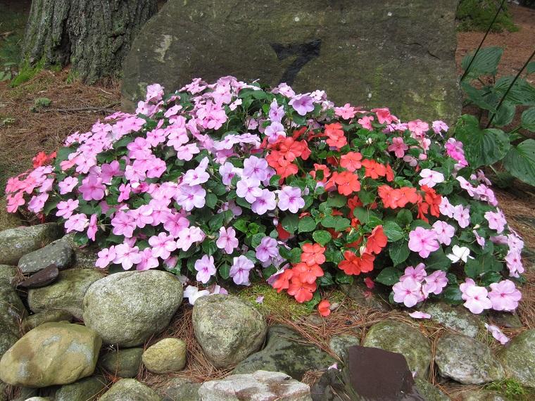 Fiori da giardino guida con le variet che vivono anche for Fiori primaverili da giardino