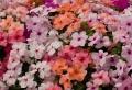 Fiori da giardino: guida con le varietà che vivono anche all'ombra