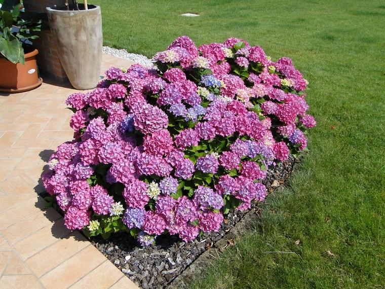 Fiori da giardino guida con le variet che vivono anche for Fiori grassi da giardino