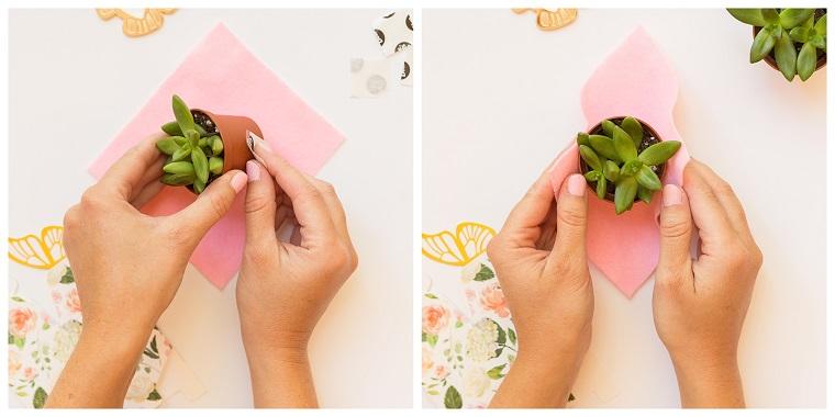 incartare con foglio rosa una piantina grassa come confezionare bomboniere