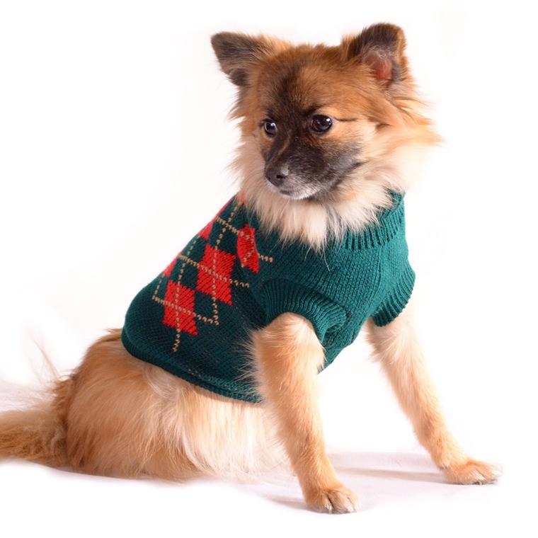 vestiti per cani per affrontare il cambio di stagione ben