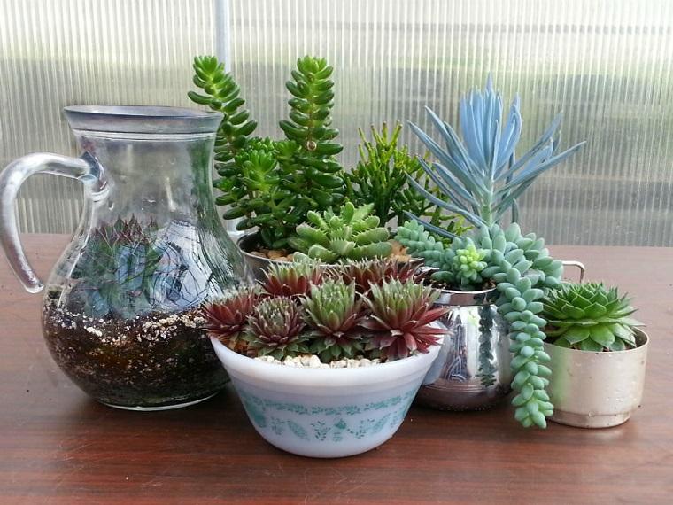Piante appartamento, nove specie che crescono rigogliose ...