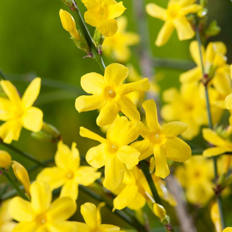 piante da ombra guida completa per un giardino fiorito