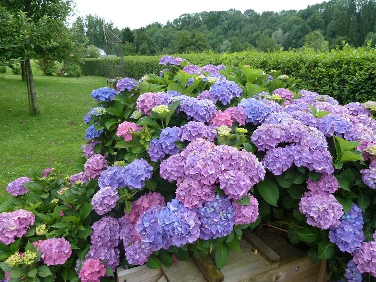 Piante da ombra guida completa per un giardino fiorito tutto l