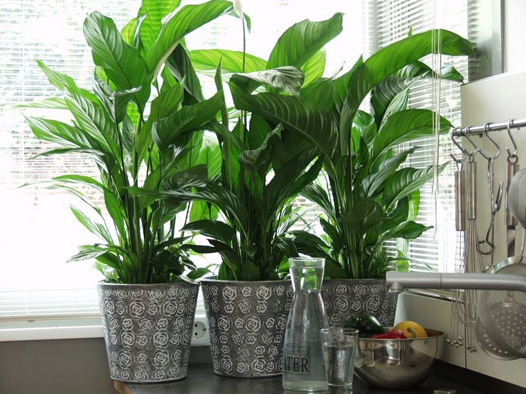 composizioni piante da appartamento