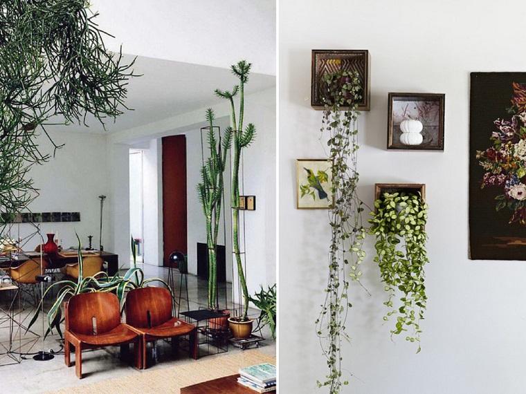 Piante da interno alcune idee per disporle in modo - Piante rampicanti da interno ...