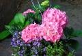 Piante da ombra: guida completa per un giardino fiorito tutto l'anno