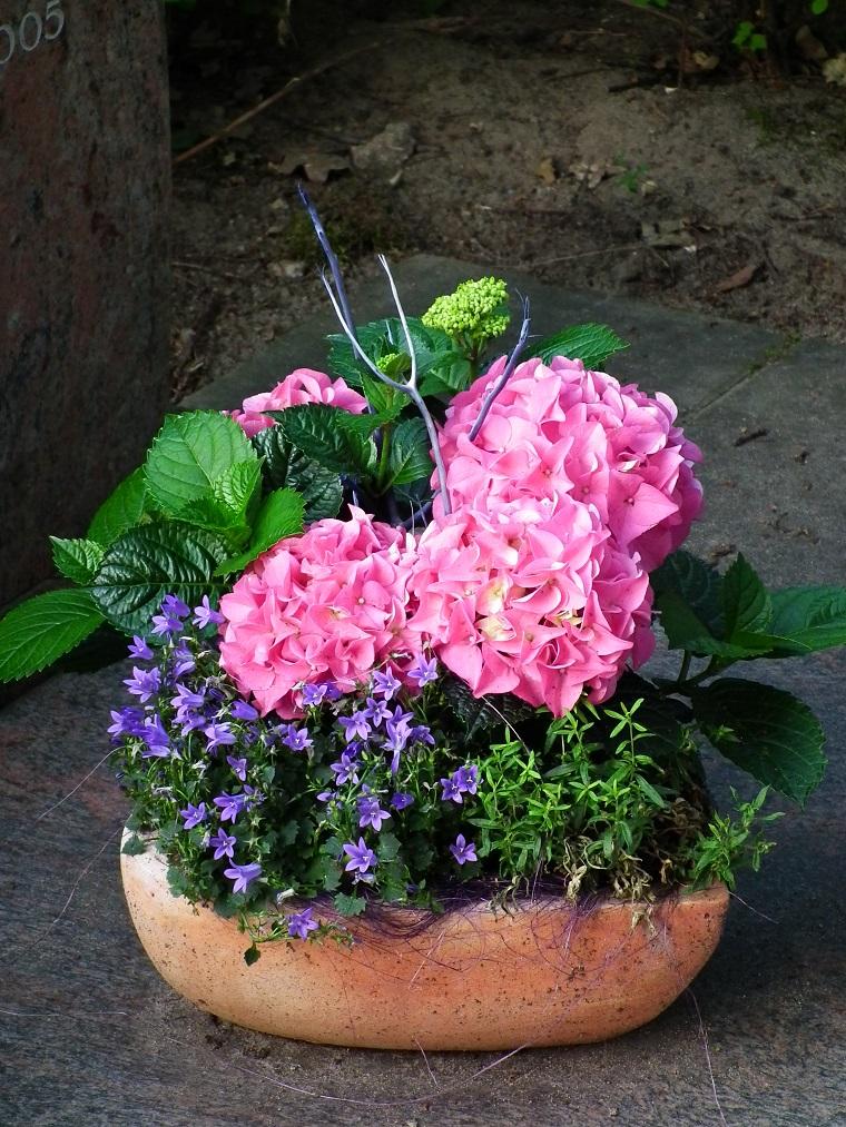 Piante da ombra guida completa per un giardino fiorito tutto l 39 anno - Piante da giardino profumate ...