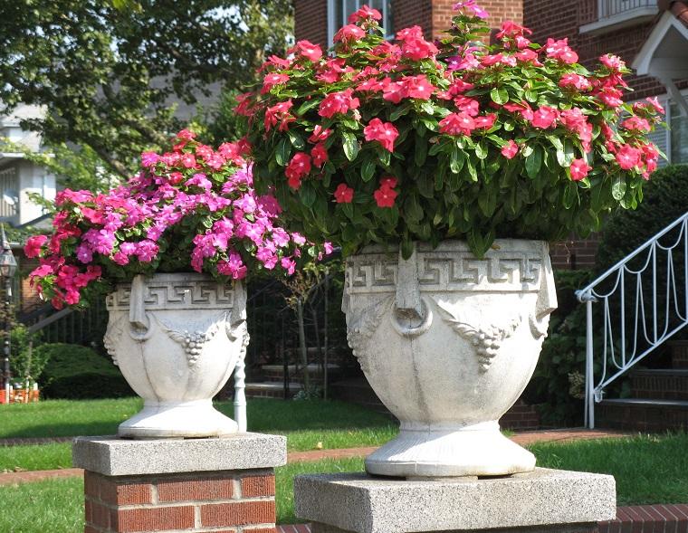 Piante da ombra guida completa per un giardino fiorito for Piante da vaso per esterno