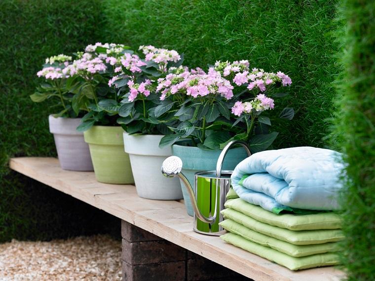 Piante da ombra guida completa per un giardino fiorito for Piante da uva in vaso
