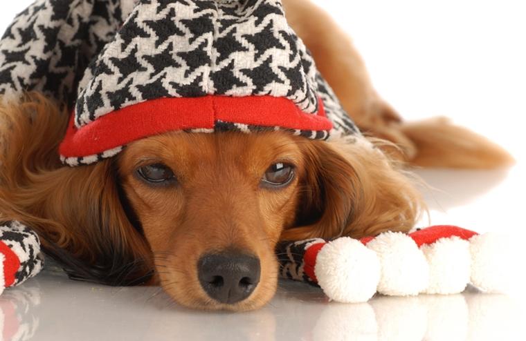 vestiti per cani creati tecnica fai da te