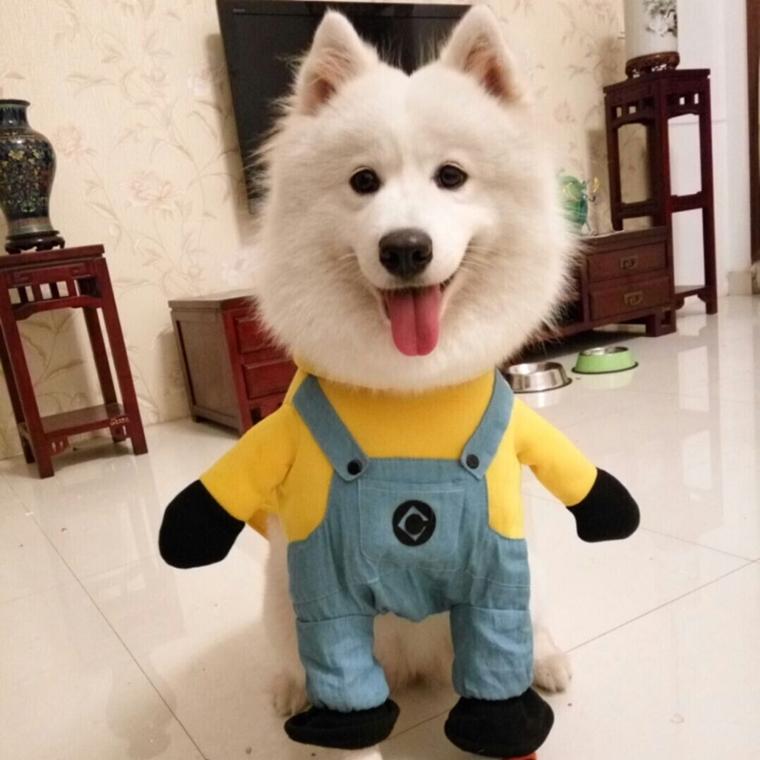vestiti per cani realizzate recuperando abiti non indossiamo