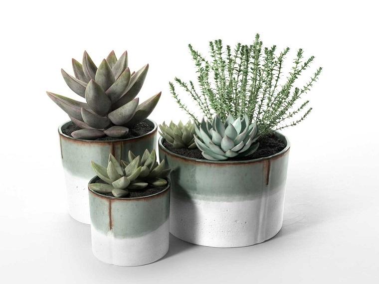 composizioni piante grasse echeveria vasetti bianchi grigi