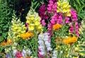 Fiori e piante: ecco alcune fra le specie più decorative e resistenti per un balcone perfetto