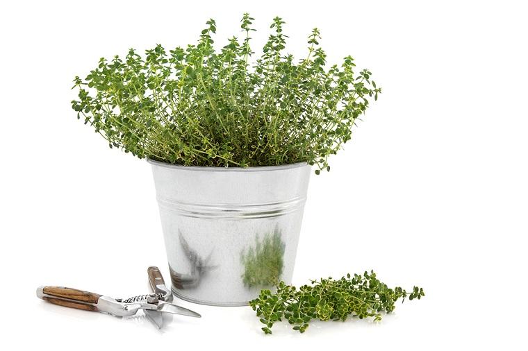 fiori e piante balcone vasetto timo