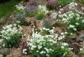 Giardini rocciosi - 23 idee mozzafiato per il vostro angolo outdoor