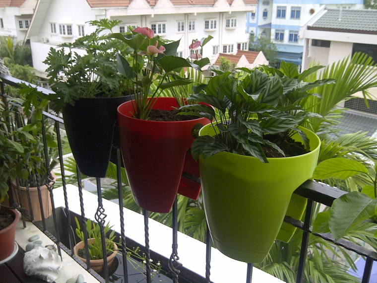 piante da balcone vasi ringhiera