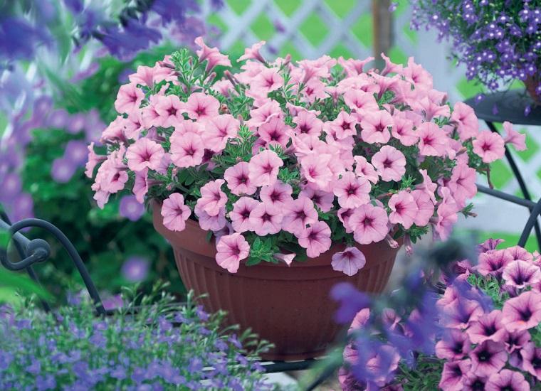 piante da balcone vaso petunie
