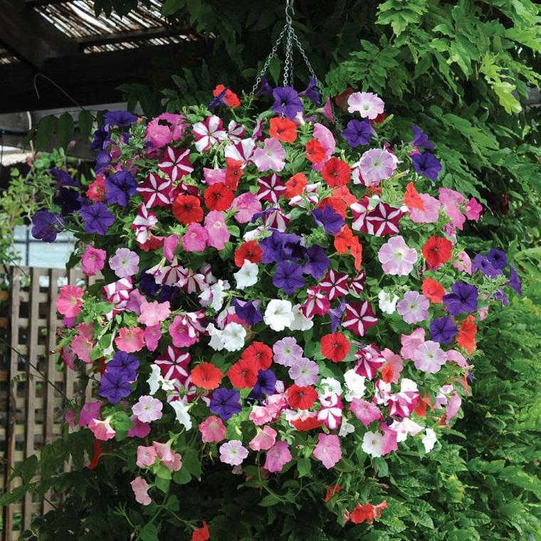 piante da balcone vaso sospeso petunie colorate