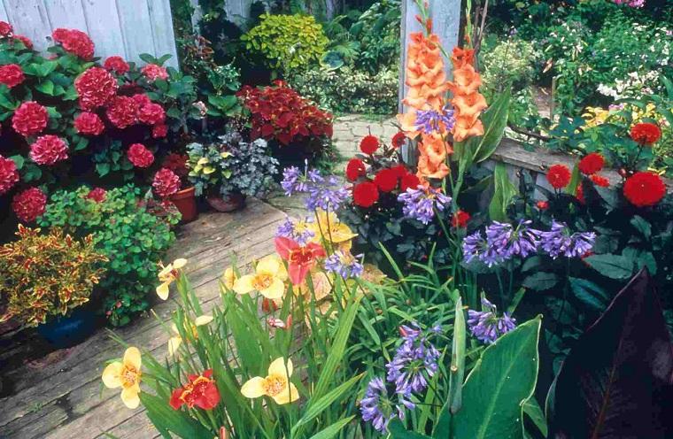 piante da esterno diverse specie