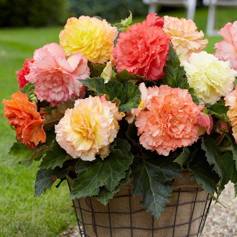 piante da esterno fiori variopinti
