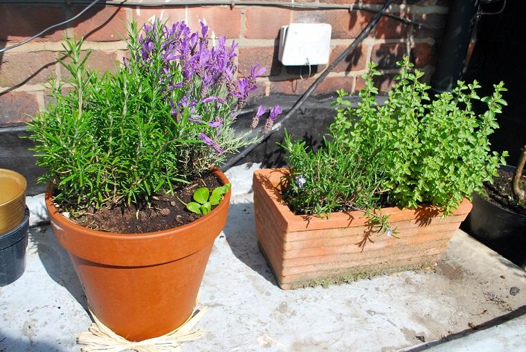 piante da esterno vasi erbe aromatiche