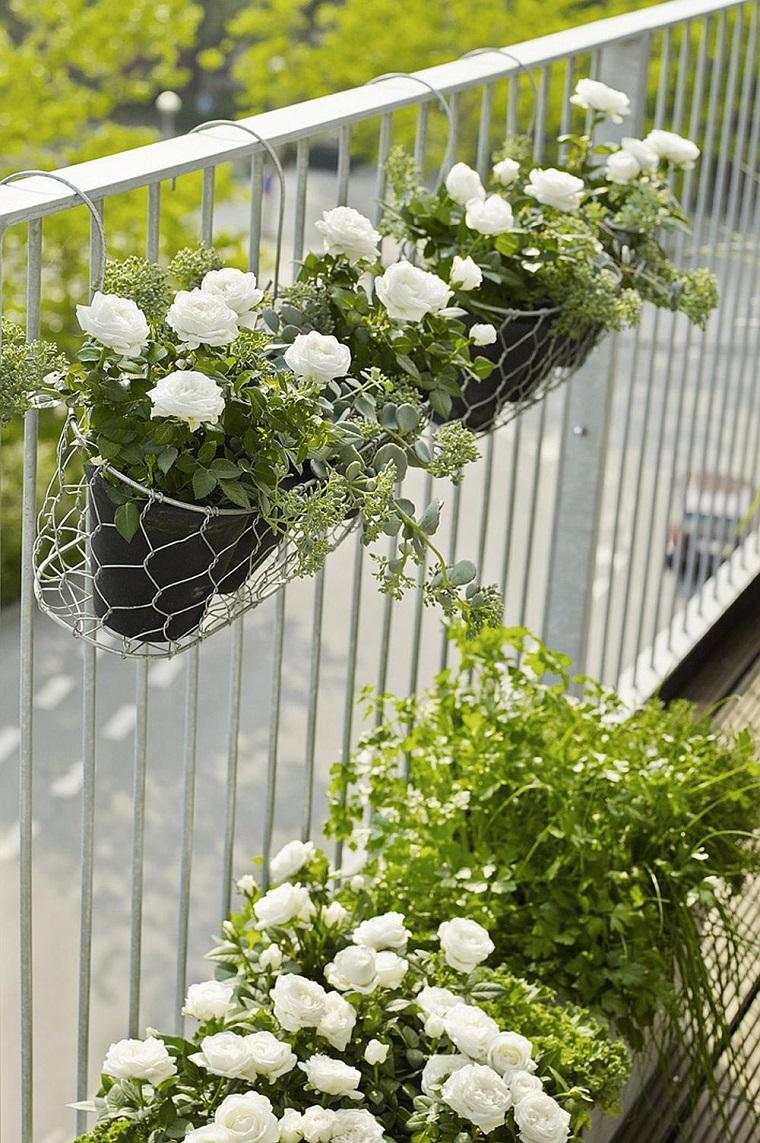piante da esterno vasi rose bianche