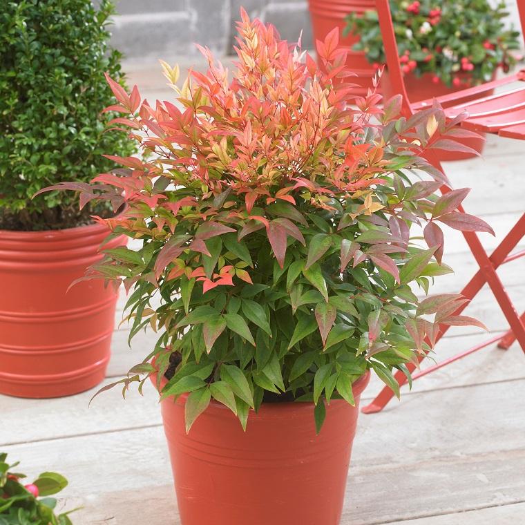 Fiori e piante ecco alcune fra le specie pi decorative e for Piante da vaso per esterno