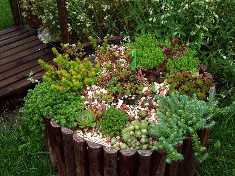 piante grasse composizione esterno sedum
