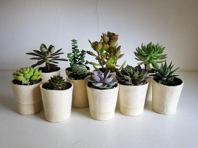 piante grasse varie specie vasetti