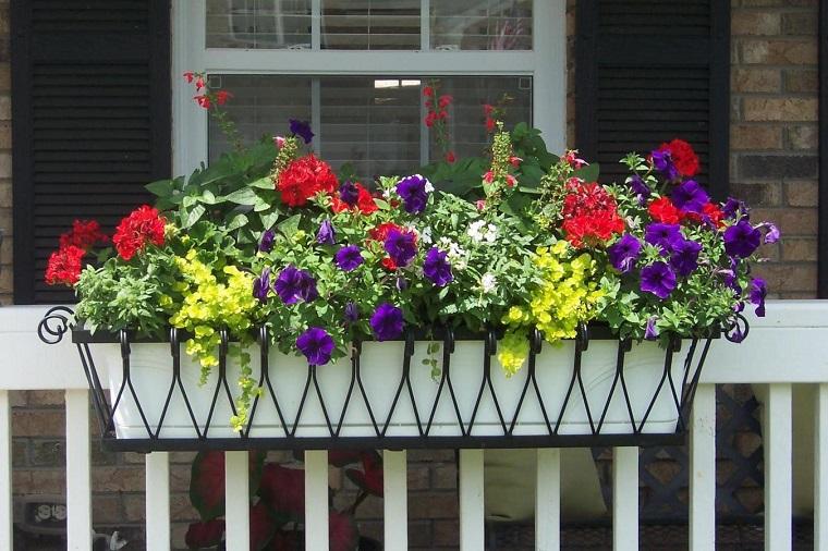piante per terrazzo splendida composizione