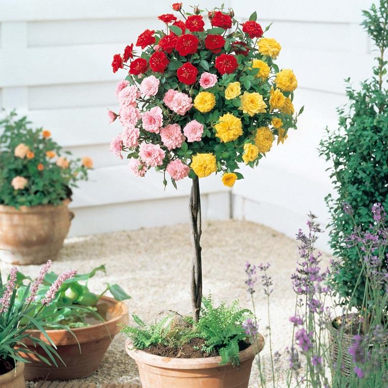 balconi fioriti alberello rose tricolore