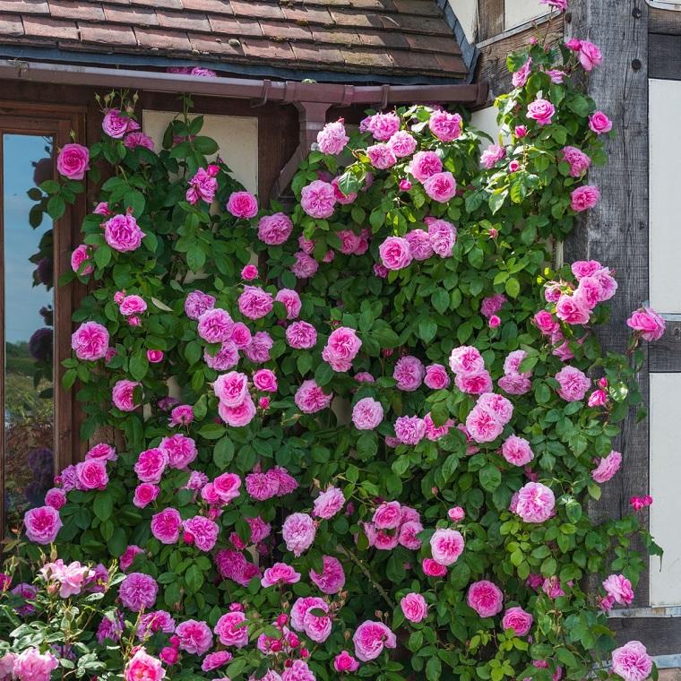 balconi fioriti roselline rampicanti