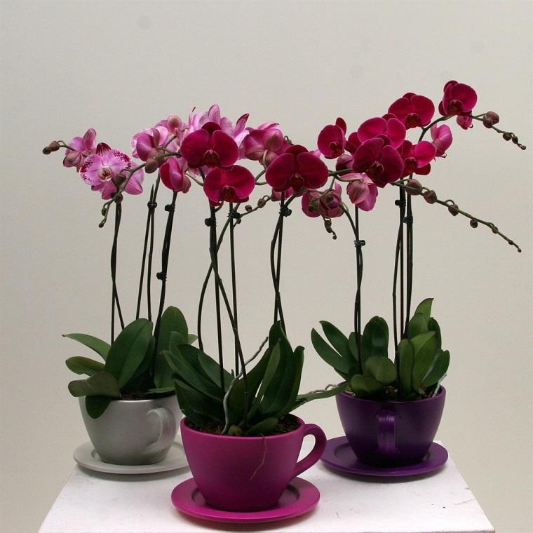 composizioni vaso originale orchidea