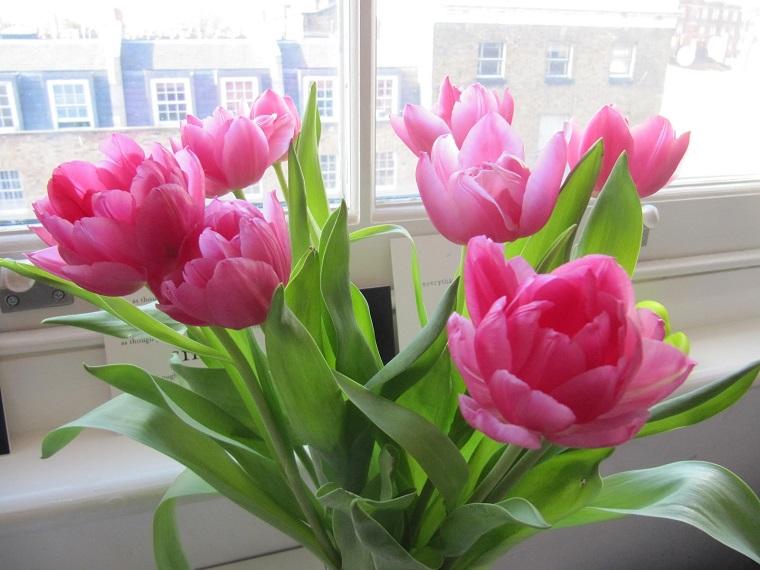 fiori da balcone mazzo tulipani