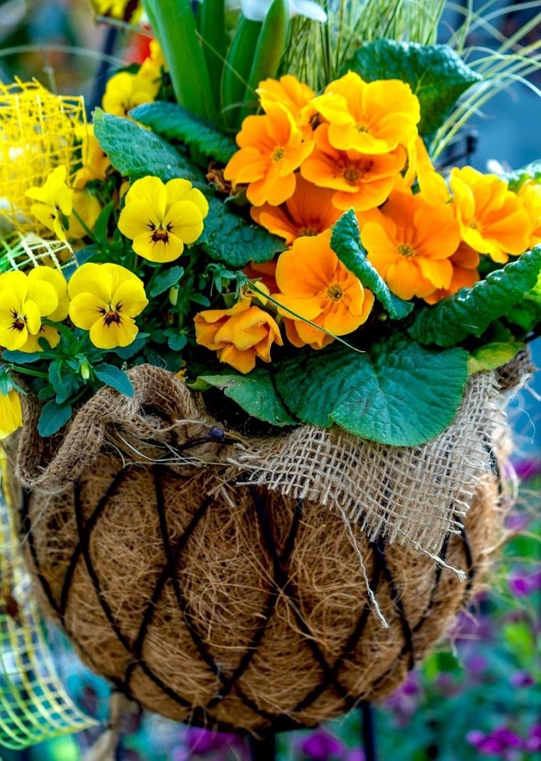 fiori da balcone primule viole