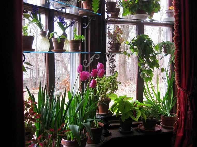 fiori da balcone tulipani altre piante