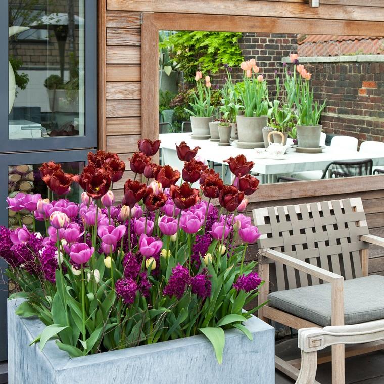 fiori da balcone tulipani rosa