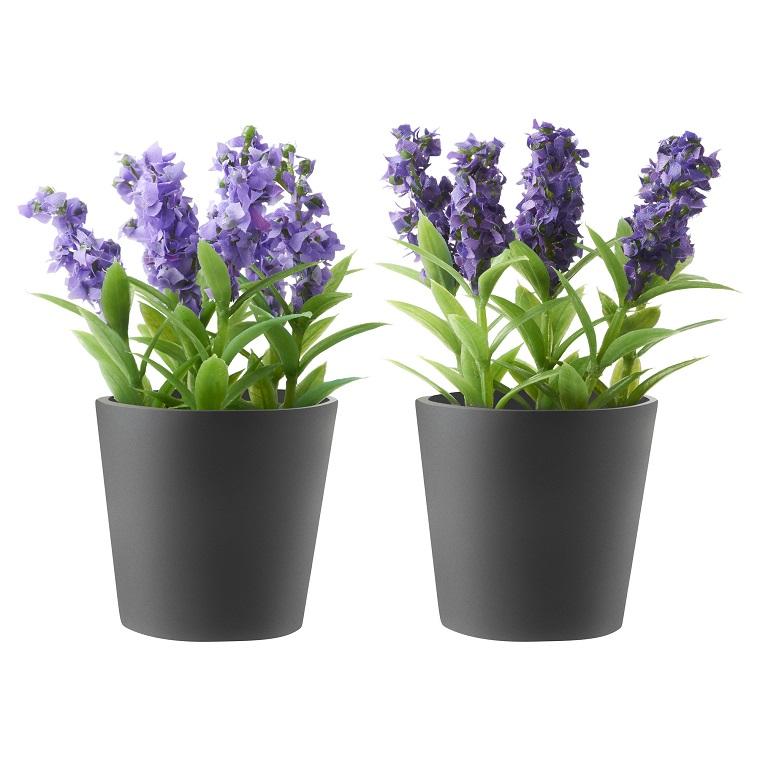 fiori da balcone vasi lavanda
