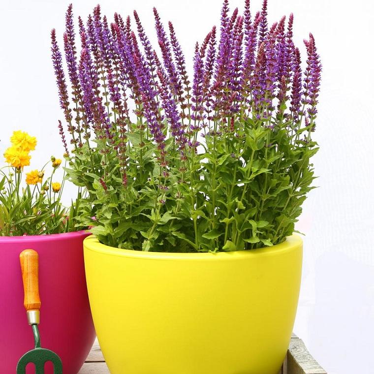 fiori per balconi lavanda vasi colorati