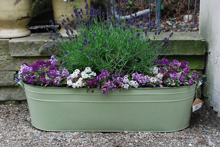 fiori per balconi lavanda vaso rettangolare
