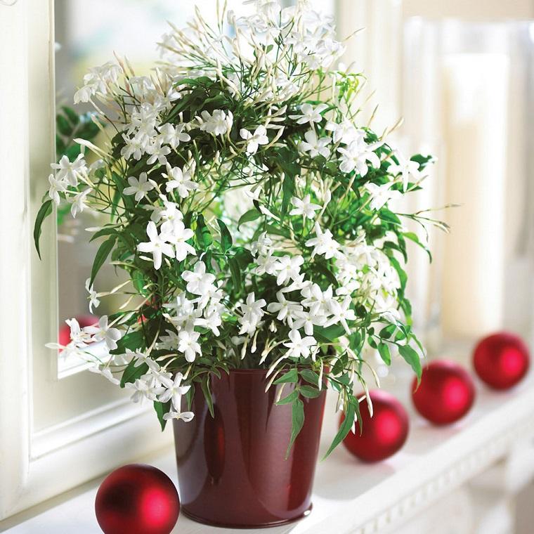 fiori per balconi vaso gelsomini bianchi