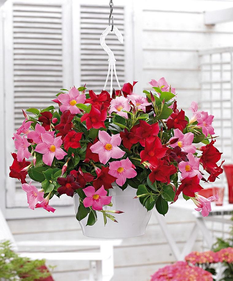 fiori per balconi vaso gelsomini colorati