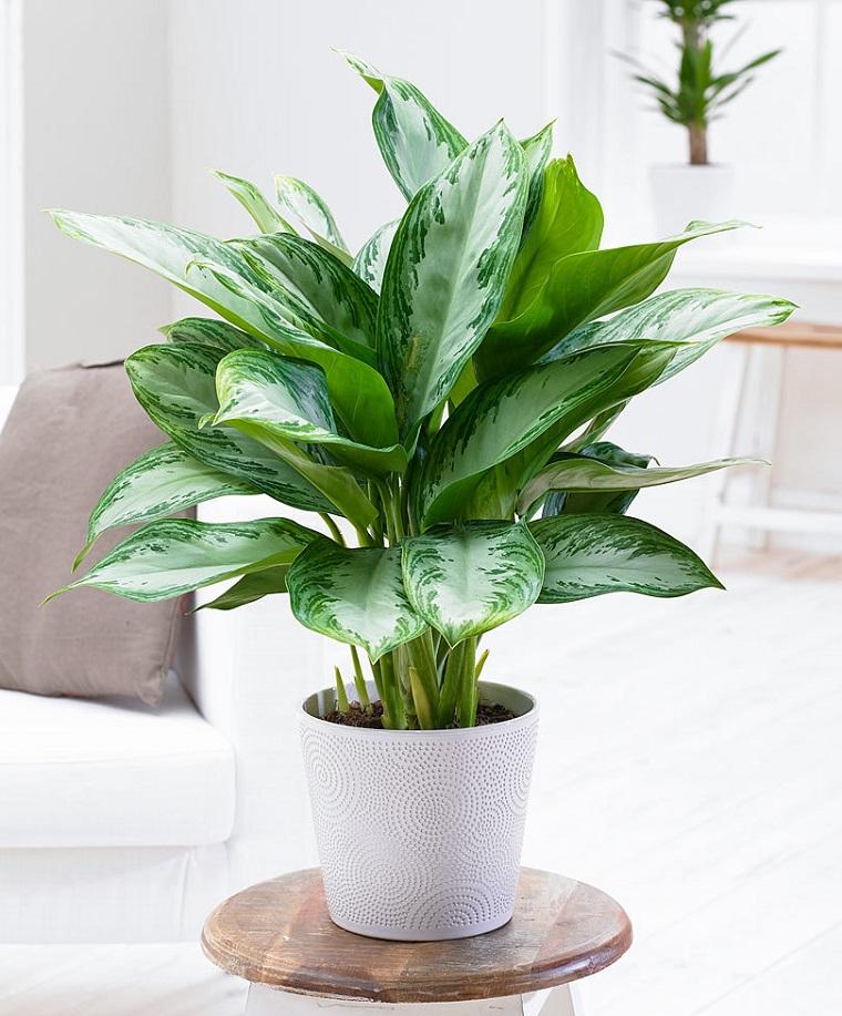 Pianta da appartamento 4 idee anche per chi non ha il - Piante verdi interno ...